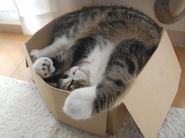 Коты в коробках на улице