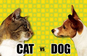 cat-vs-dog